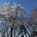 Photos: 松ヶ崎大黒天・日蓮上人像