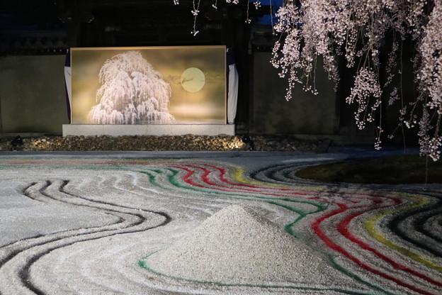 高台寺・「おぼろ」と桜6