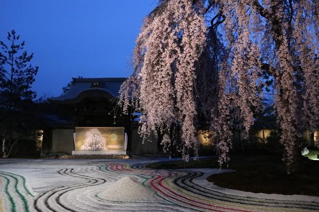 高台寺・枝垂桜と「おぼろ」10