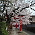 Photos: 竹中稲荷・参道2