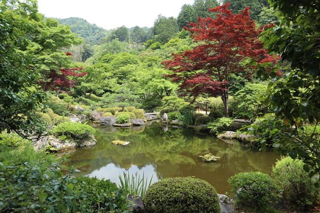 三室戸寺・池泉庭園1