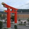 京都国立近代美術館より平安神宮大鳥居