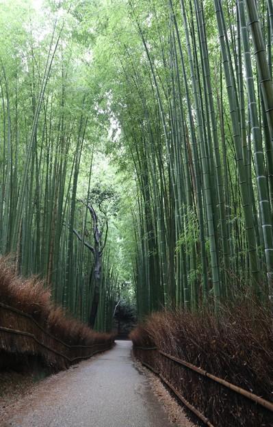 竹林の小径6