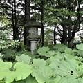 真鍋庭園・日本庭園6