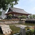 Photos: 四天王寺・亀の池
