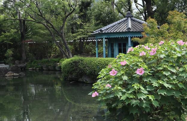 四天王寺・本坊庭園11