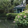 Photos: 四天王寺・本坊庭園11