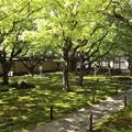 黄梅院・前庭1