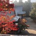 Photos: 神護寺・金堂より境内1
