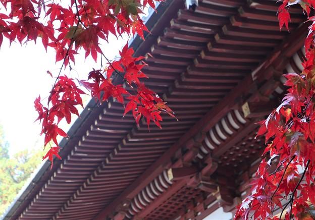 Photos: 神護寺・金堂2