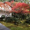 Photos: 西明寺・庭園2