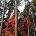Photos: 高山寺・表参道4