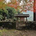 Photos: 高山寺・明恵上人御廟