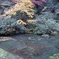 三徳山三佛寺・輪光院(庭園)