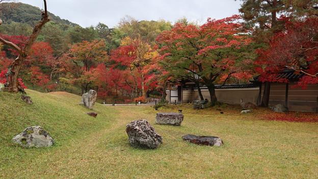 高台寺庭園1