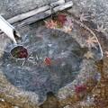 Photos: 紅葉の氷漬け