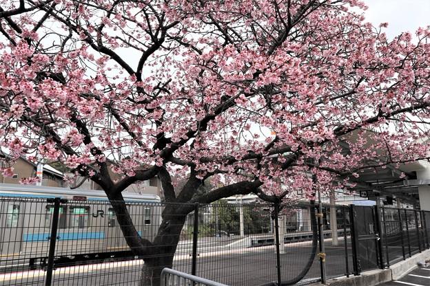 JR桃山駅2
