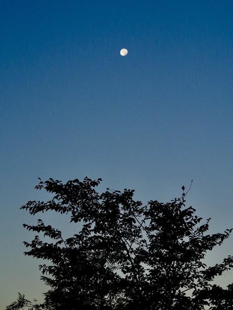 Photos: 早朝の月