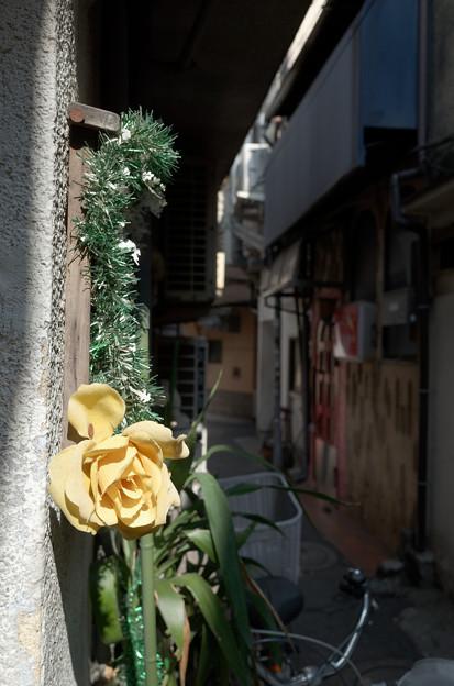 曲がり角の花
