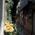 Photos: 曲がり角の花