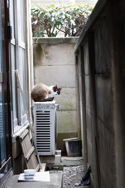 Photos: 隙間の猫