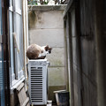 写真: 隙間の猫