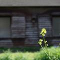 写真: 春の午後