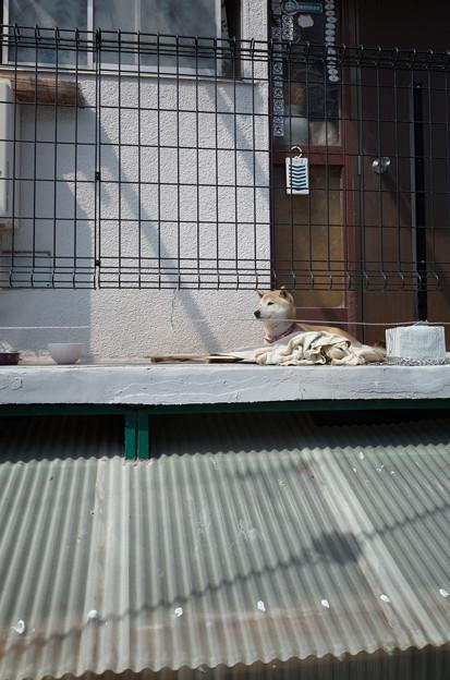 写真: 番犬