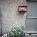 写真: 金のなる樹
