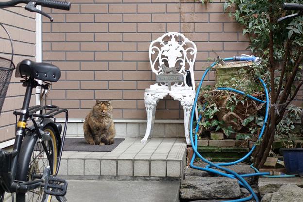 写真: 猫とホース