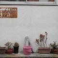 写真: ピンクのバケツ