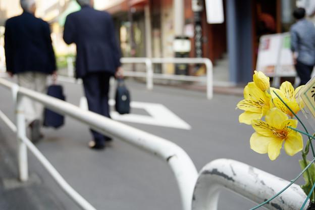 写真: 偽りの花