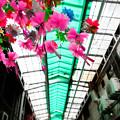 写真: OGIKUBO
