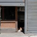 写真: 車庫の猫