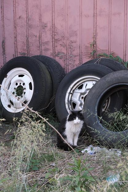 タイヤと猫