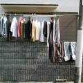 写真: 洗濯日和