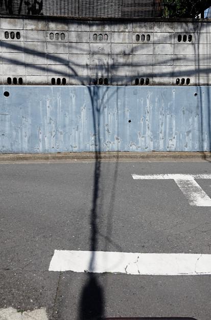 分岐する影
