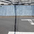 写真: 分岐する影