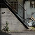 写真: 階段のある風景