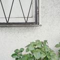 Photos: 枯花