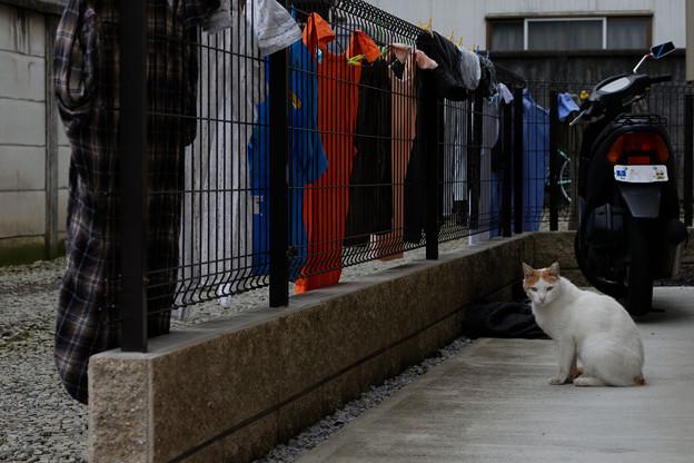 猫と洗濯物