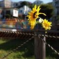 写真: 現場の花