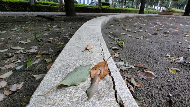 Photos: 犬の日常_52