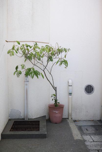 鉢植えと水道