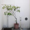 写真: 鉢植えと水道
