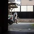写真: 駐輪場の猫