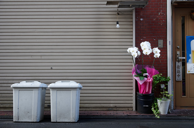 花とポリバケツ