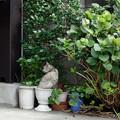 Photos: 鉢猫