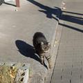 Photos: 近づく猫