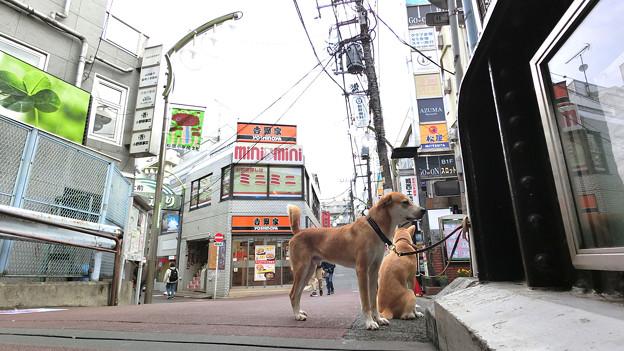 犬の日常_68